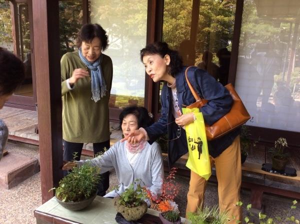 秋の「山野草展」始まる①_f0289632_11235455.jpg