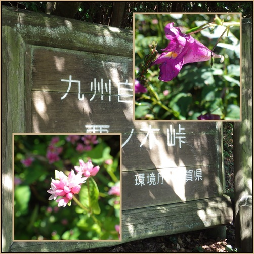 国見山・・九州自然歩道、栗ノ木峠_e0164643_14351689.jpg