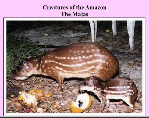 さすがアマゾン!GISO DE MAJASの肉たっぷり_c0030645_11010221.jpg
