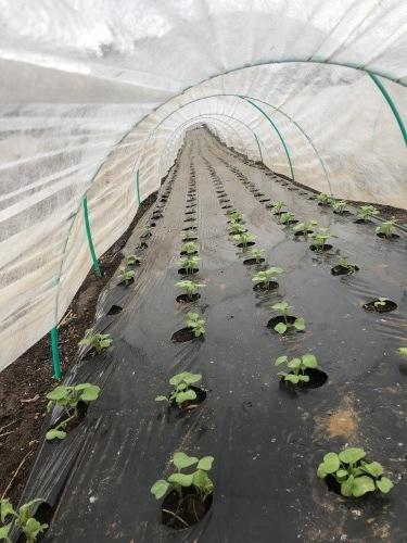茄子&カボチャ&ズッキーニの畝を全て片付け枯れ枝をすべて燃やし・・葉物収穫_c0222448_18032562.jpg