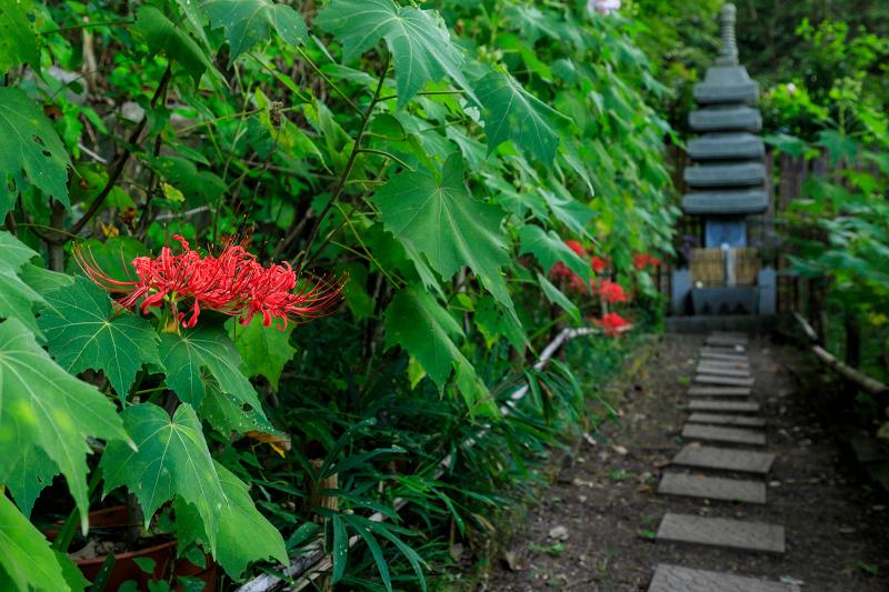 大乗寺の彼岸花と秋の花々_f0155048_094855.jpg