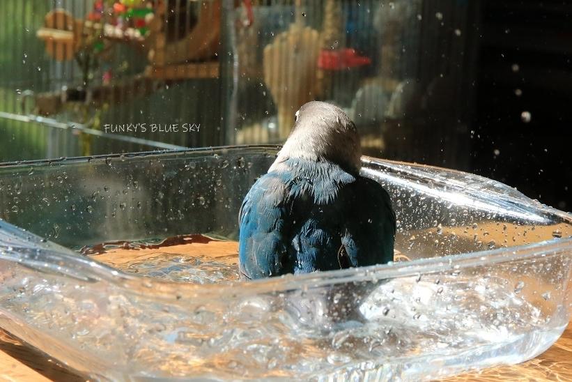 水浴びB.Bの記録(10月13日)_c0145250_14383620.jpg