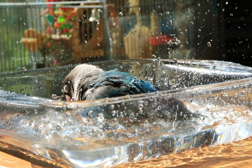 水浴びB.Bの記録(10月13日)_c0145250_14384346.jpg