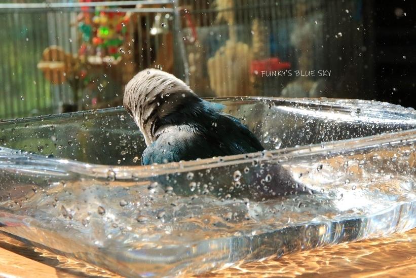 水浴びB.Bの記録(10月13日)_c0145250_14384731.jpg