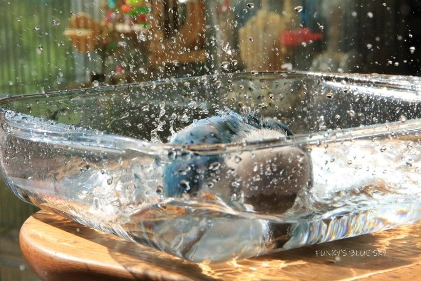 水浴びB.Bの記録(10月13日)_c0145250_14390262.jpg