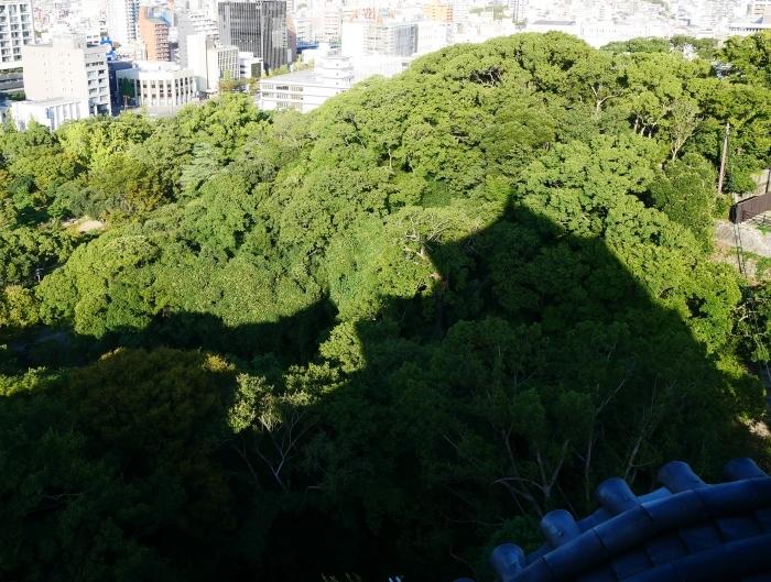 和歌山城へ 30mm(35mm換算)単焦点レンズ試写 2  2019-10-22 00:00     _b0093754_21135333.jpg