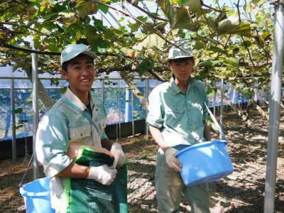 熊本ぶどう 社方園 収穫を終えたぶどう園にお礼肥えです!鹿本農業高校から来た実習生と共に(2019)後編_a0254656_17392440.jpg
