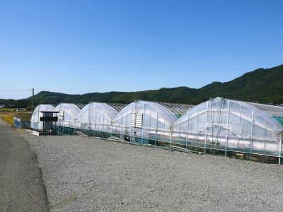 熊本ぶどう 社方園 収穫を終えたぶどう園にお礼肥えです!鹿本農業高校から来た実習生と共に(2019)後編_a0254656_17470405.jpg