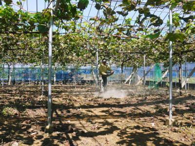 熊本ぶどう 社方園 収穫を終えたぶどう園にお礼肥えです!鹿本農業高校から来た実習生と共に(2019)後編_a0254656_17483731.jpg
