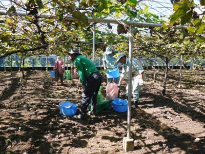 熊本ぶどう 社方園 収穫を終えたぶどう園にお礼肥えです!鹿本農業高校から来た実習生と共に(2019)後編_a0254656_18053475.jpg