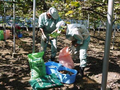 熊本ぶどう 社方園 収穫を終えたぶどう園にお礼肥えです!鹿本農業高校から来た実習生と共に(2019)後編_a0254656_18072924.jpg