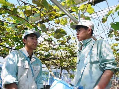 熊本ぶどう 社方園 収穫を終えたぶどう園にお礼肥えです!鹿本農業高校から来た実習生と共に(2019)後編_a0254656_18092366.jpg