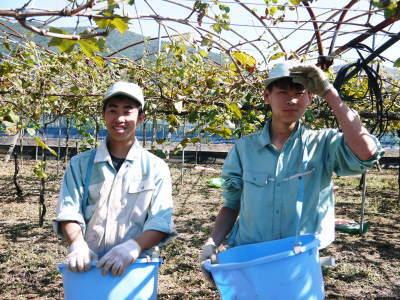 熊本ぶどう 社方園 収穫を終えたぶどう園にお礼肥えです!鹿本農業高校から来た実習生と共に(2019)後編_a0254656_18155435.jpg