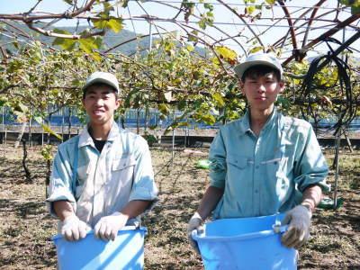 熊本ぶどう 社方園 収穫を終えたぶどう園にお礼肥えです!鹿本農業高校から来た実習生と共に(2019)後編_a0254656_18241443.jpg