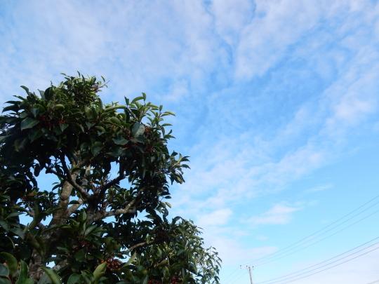'19,10,17(木)続「トルコの草原」の絵とホイコーロ味!_f0060461_10375580.jpg