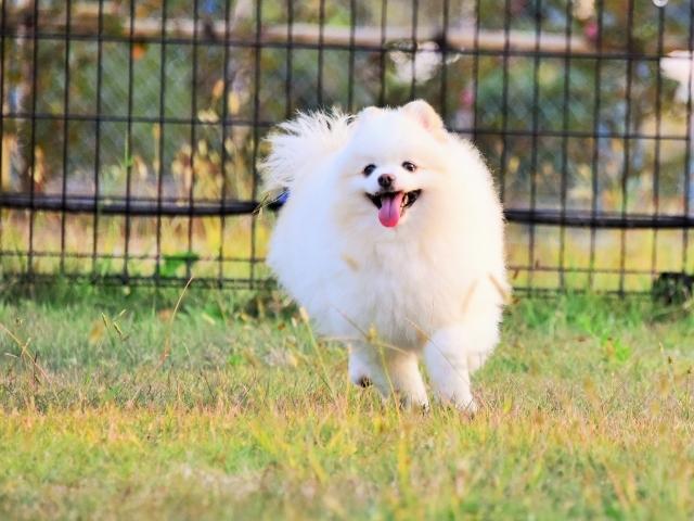 保護犬というブランド_d0360206_23413029.jpg