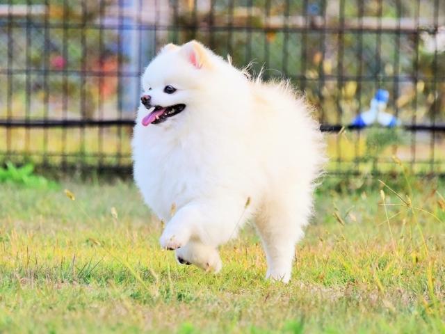 保護犬というブランド_d0360206_23413404.jpg