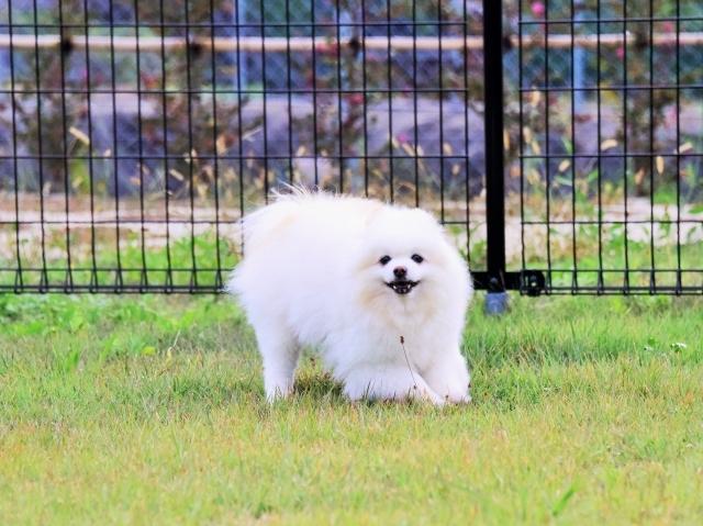 保護犬というブランド_d0360206_23413999.jpg