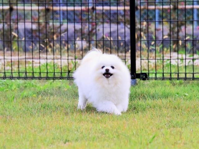 保護犬というブランド_d0360206_23414265.jpg