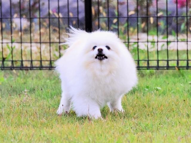 保護犬というブランド_d0360206_23414736.jpg