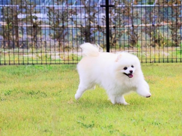 保護犬というブランド_d0360206_23415119.jpg