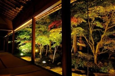 清水園 庭園ライトアップの御案内_e0135219_11542010.jpg