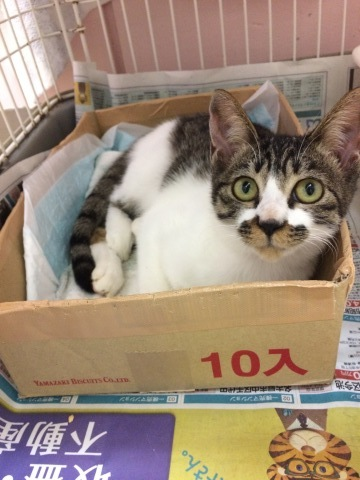 10/15 センターレポート【猫編】PART1_f0078320_01224093.jpg