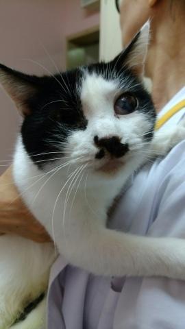 10/15 センターレポート【猫編】PART1_f0078320_01555381.jpg