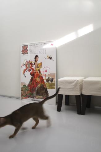 [猫的] お仕事_e0090124_22161079.jpg