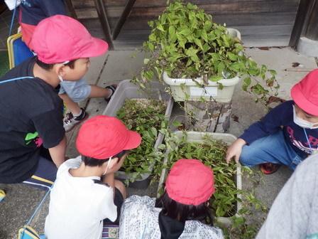 小学生、秋の環境学習_a0123836_16000457.jpg