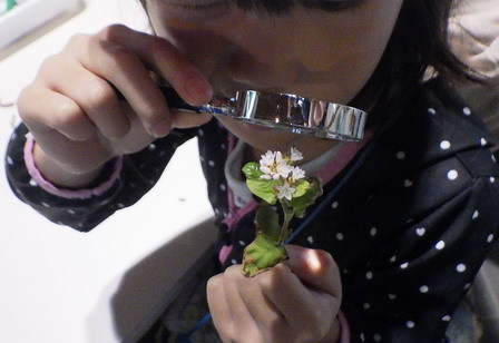 小学生、秋の環境学習_a0123836_16275427.jpg