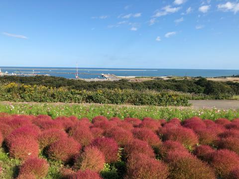 ひたち海浜公園へ_e0230154_22083643.jpg