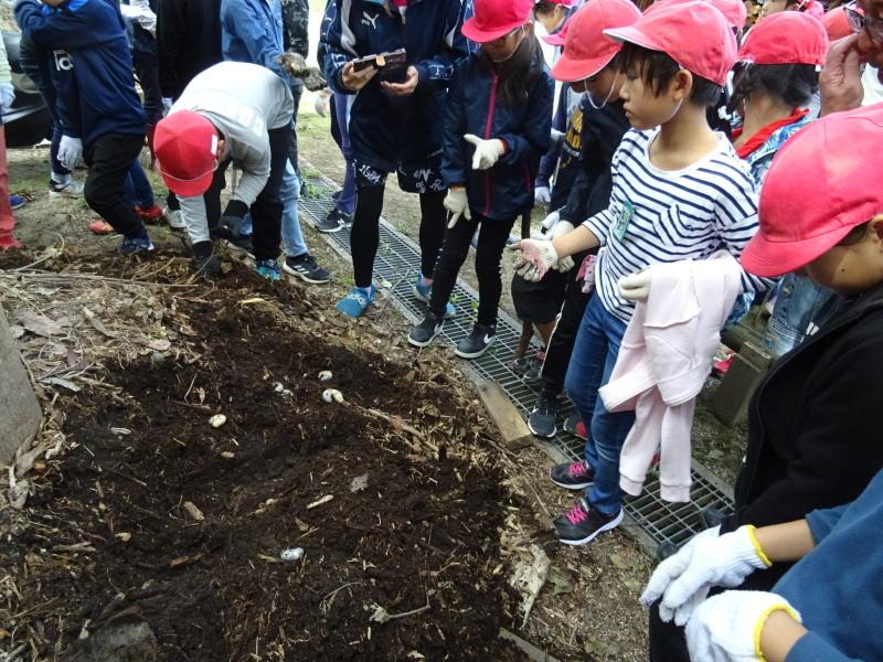 岸和田市立東光小学校4年生遠足サポート・・・うみべの森_c0108460_17471791.jpg