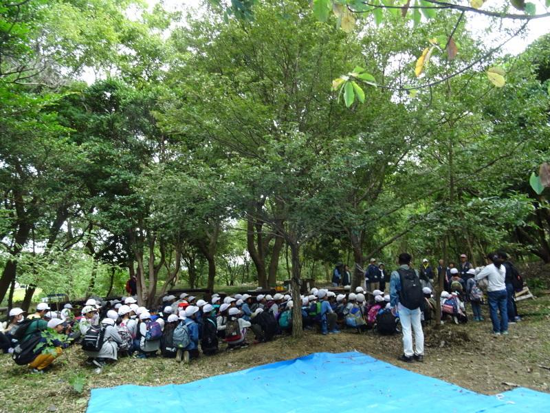 岸和田市立東光小学校4年生遠足サポート・・・うみべの森_c0108460_17485011.jpg