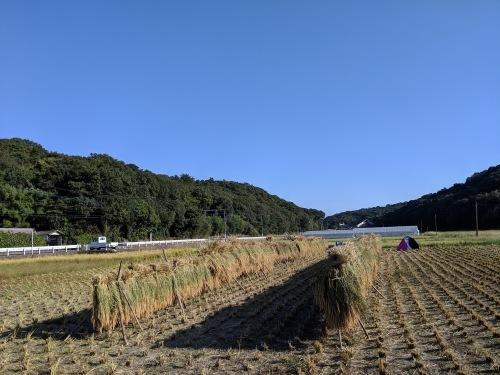 穂増 稲刈りからの脱穀_e0181260_06132908.jpeg