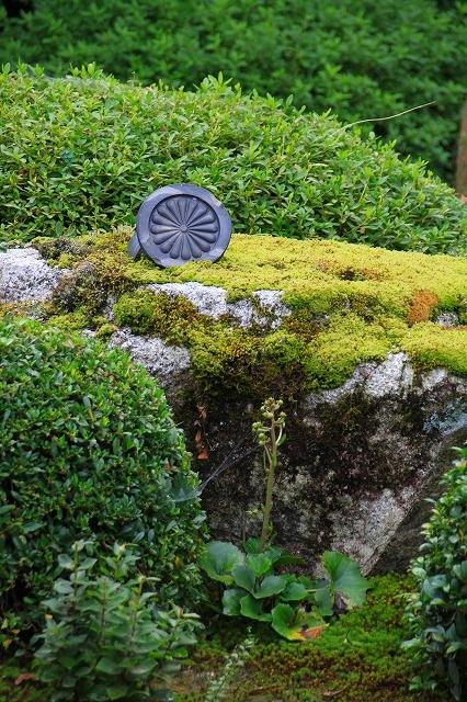 京都 雲龍院 ①_f0374092_17494597.jpg