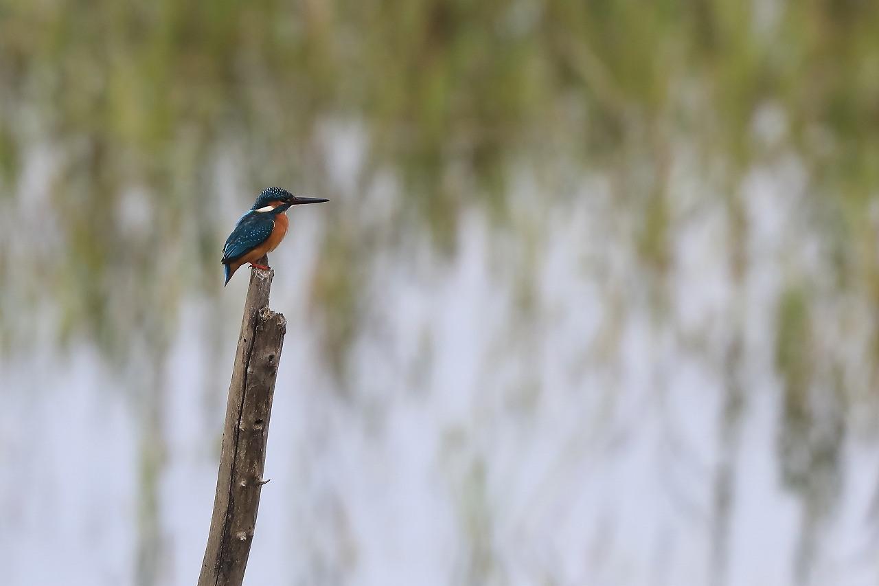 湿原にて_f0296999_15100314.jpg