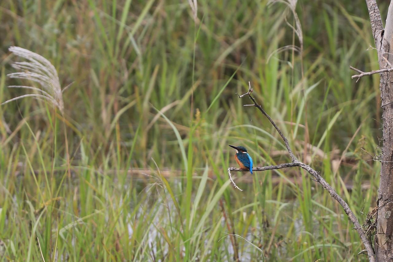湿原にて_f0296999_15100975.jpg