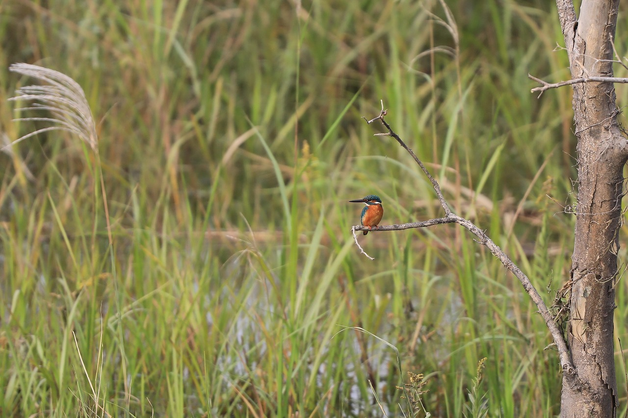 湿原にて_f0296999_15101576.jpg