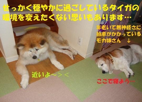 f0121712_12485202.jpg