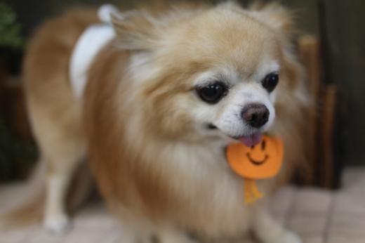 10月15日ご来店のワンちゃんです!!_b0130018_08515442.jpg