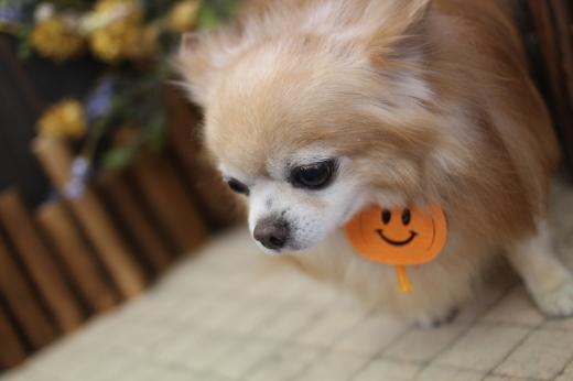 10月15日ご来店のワンちゃんです!!_b0130018_08515807.jpg