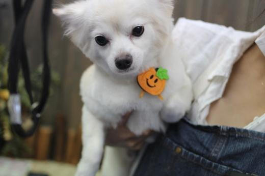 10月16日ご来店のワンちゃんです!!_b0130018_09171778.jpg