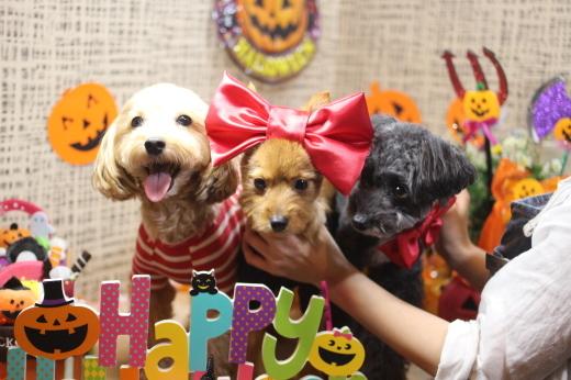 10月16日ご来店のワンちゃんです!!_b0130018_09213834.jpg