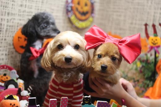 10月16日ご来店のワンちゃんです!!_b0130018_09214122.jpg