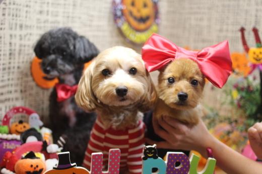 10月16日ご来店のワンちゃんです!!_b0130018_09215060.jpg