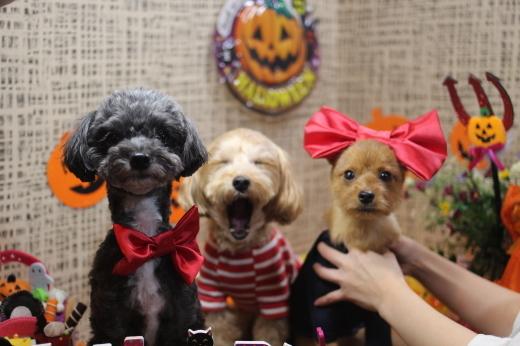 10月16日ご来店のワンちゃんです!!_b0130018_09215300.jpg