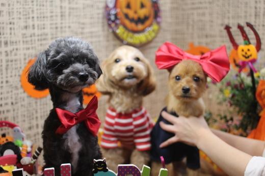 10月16日ご来店のワンちゃんです!!_b0130018_09215731.jpg