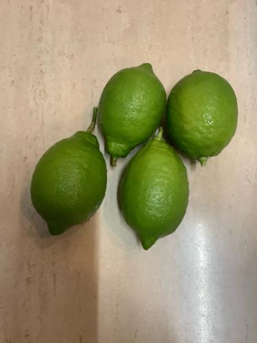 レモンの木_c0124828_10375673.jpg