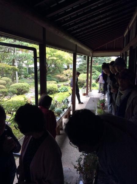 秋の「山野草展」②_f0289632_08165416.jpg